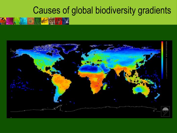Causes of global biodiversity gradients