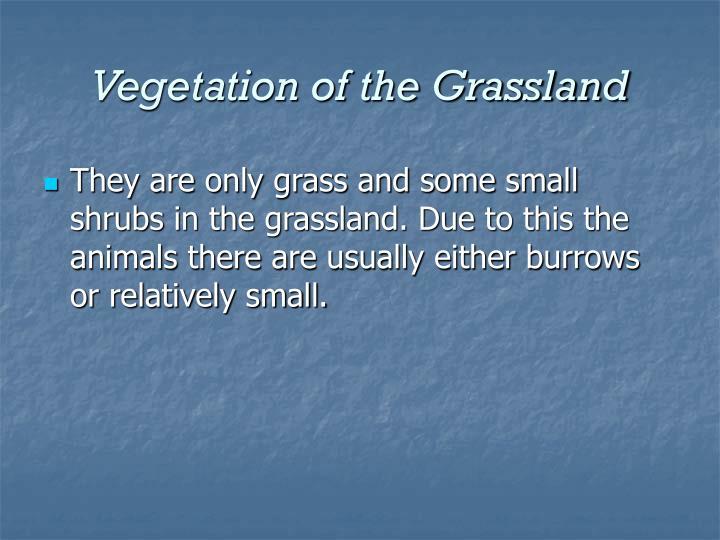 Vegetation of the Grassland
