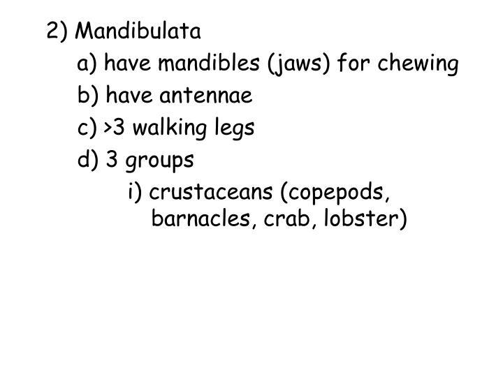2) Mandibulata