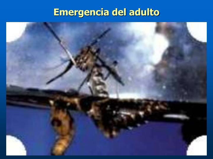 Emergencia del adulto