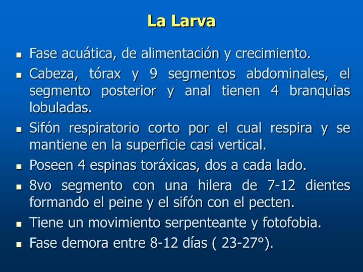 La Larva