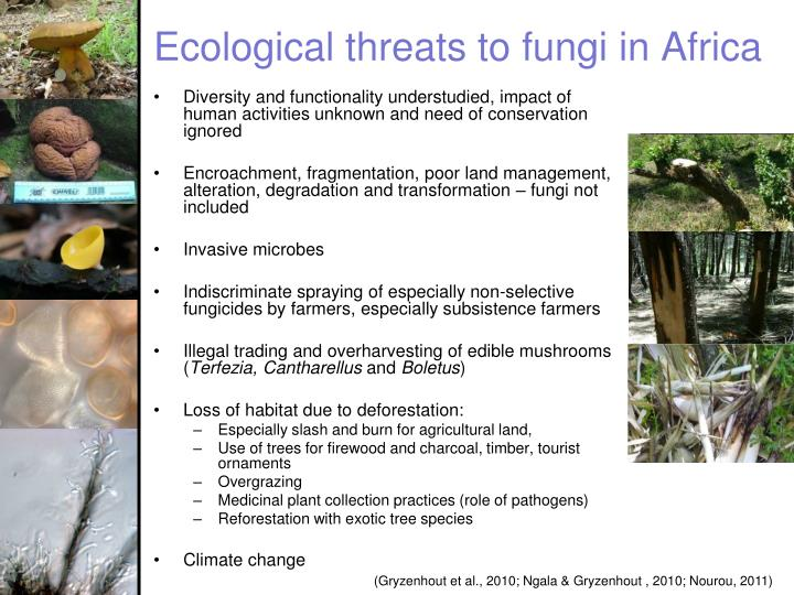 Ecological threats to fungi in Africa