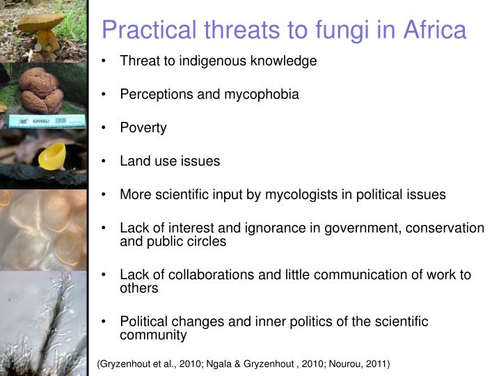 Practical threats to fungi in Africa