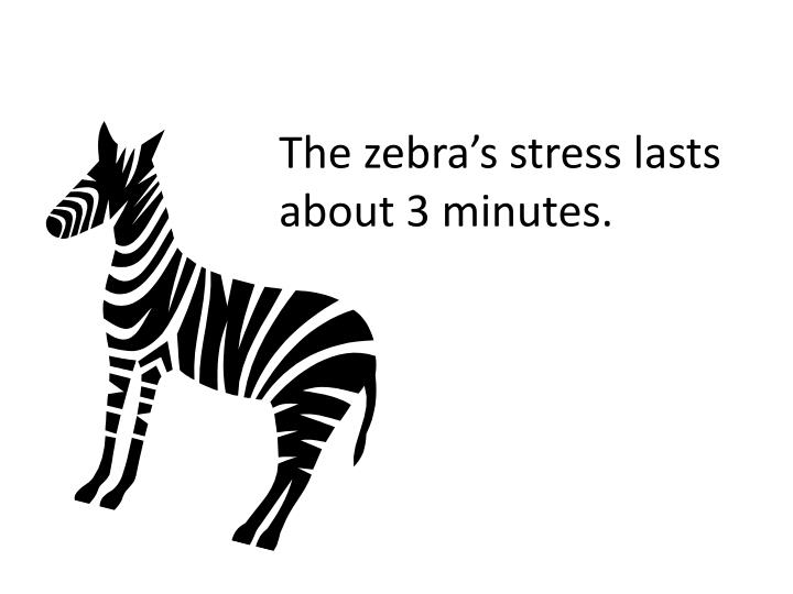 The zebra's stress lasts