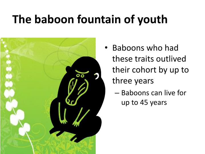 The baboon fountain of youth