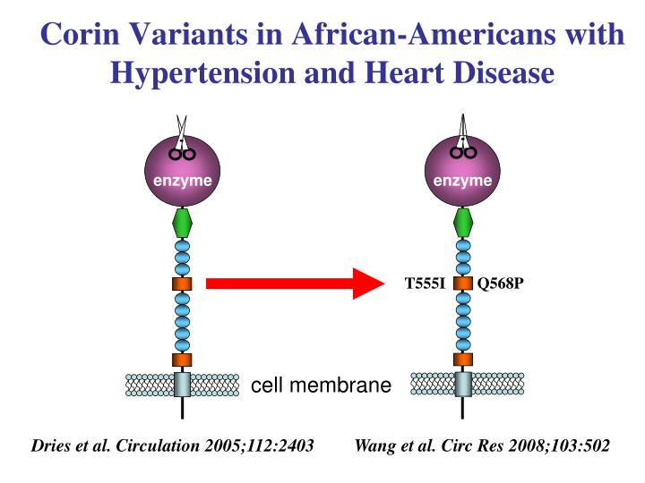 Corin Variants in African-Americans with Hypertension and Heart Disease