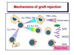 mechanisms of graft rejection