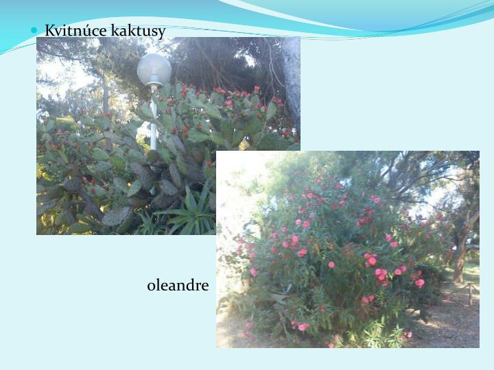 Kvitnce kaktusy