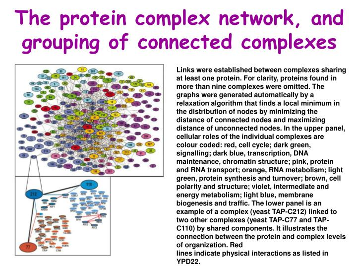 The protein complex network, and grouping of connected complexes