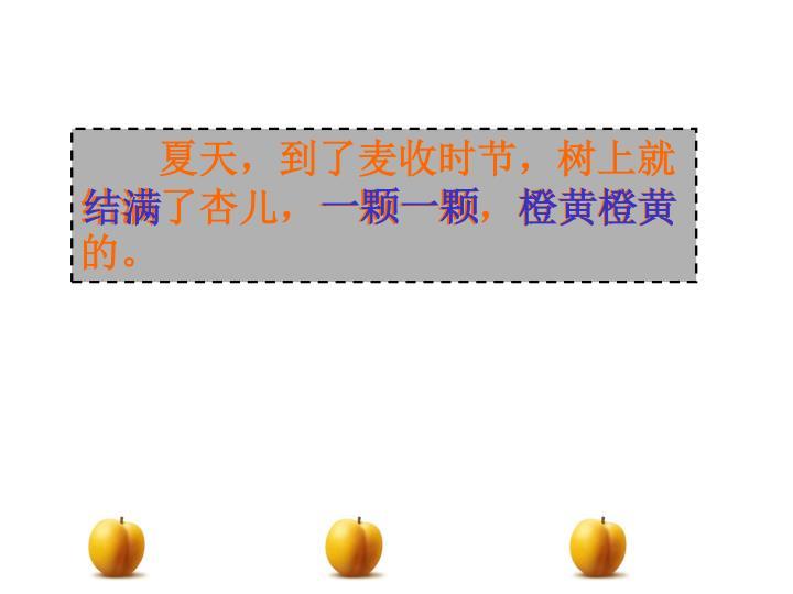 夏天,到了麦收时节,树上就结满了杏儿,一颗一颗,橙黄橙黄的。