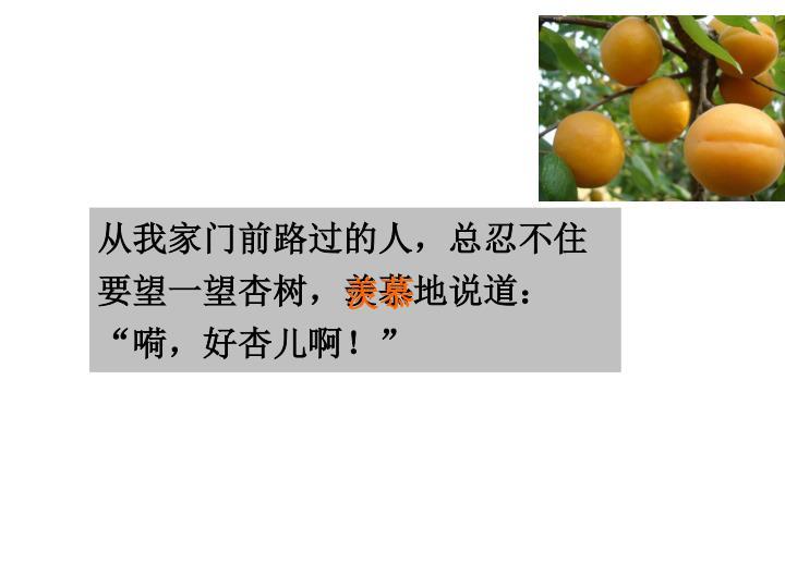 """从我家门前路过的人,总忍不住要望一望杏树,羡慕地说道:""""嗬,好杏儿啊!"""""""