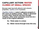 capillary action water climbs up small spaces