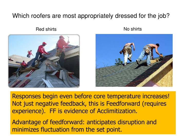 Which roofers are most appropriately dressed for the job?