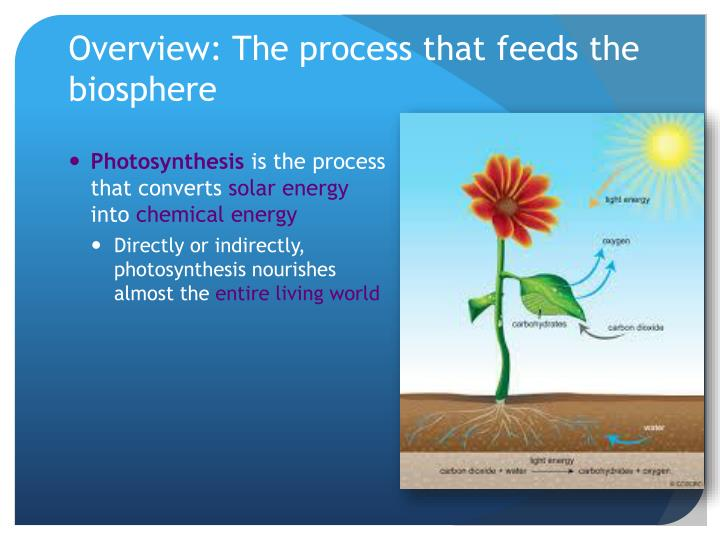 Overview the process that feeds the biosphere