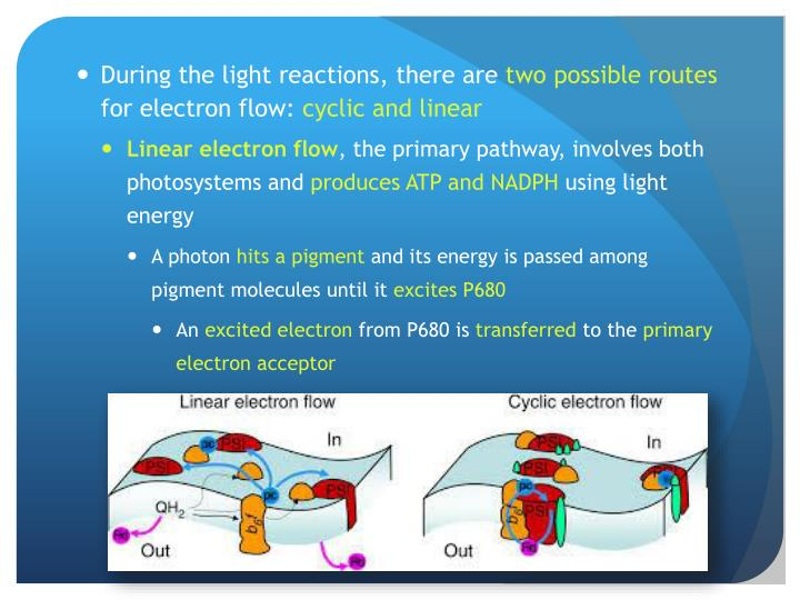 During the light reactions, there are