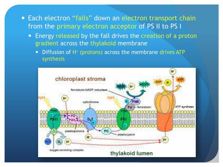 Each electron