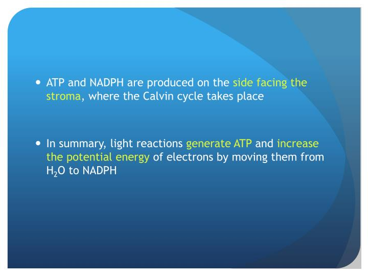 ATP and NADPH are produced on the