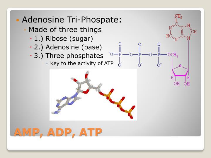 Adenosine Tri-