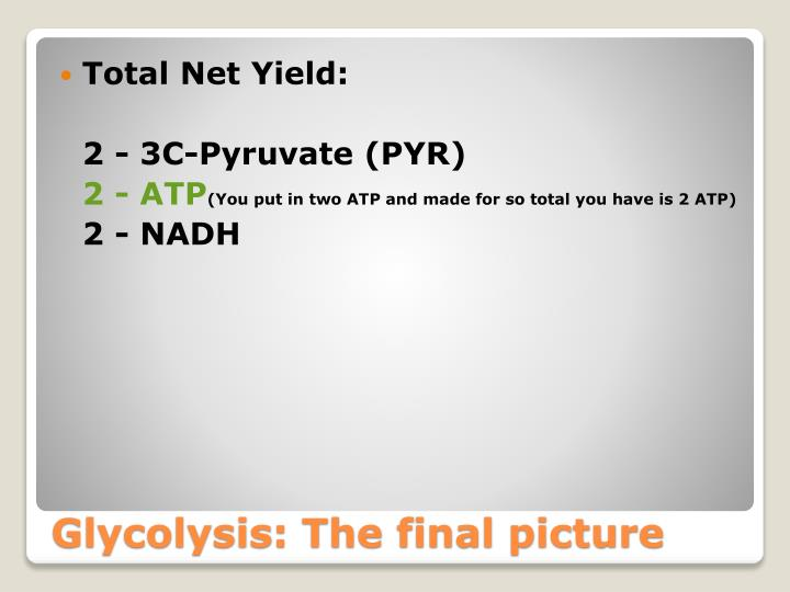Total Net Yield: