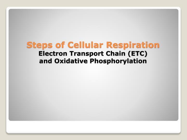 Steps of Cellular Respiration