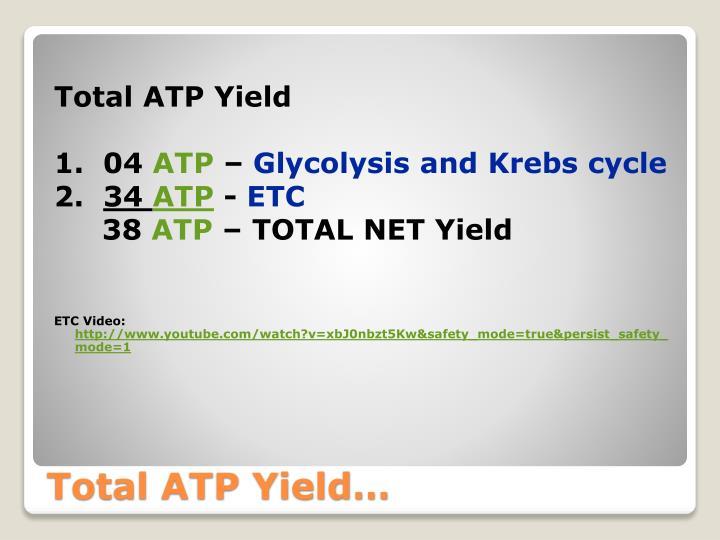 Total ATP Yield