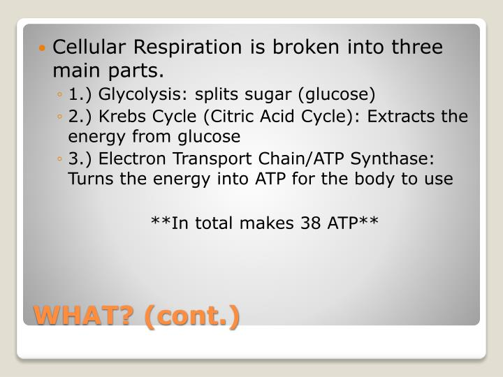 Cellular Respiration is broken into three main parts.