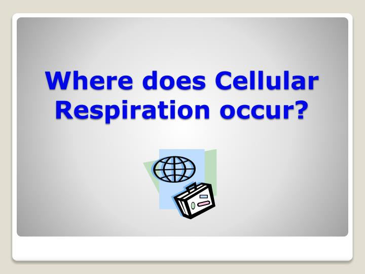 Where does Cellular Respiration occur?