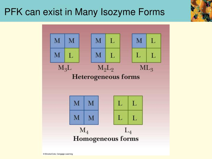 PFK can exist in Many Isozyme Forms