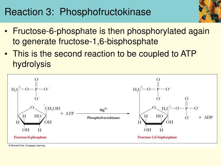 Reaction 3:  Phosphofructokinase