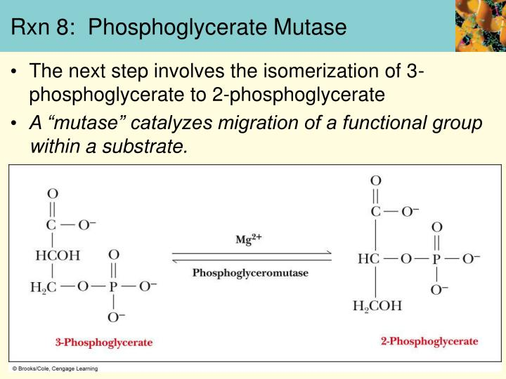 Rxn 8:  Phosphoglycerate Mutase