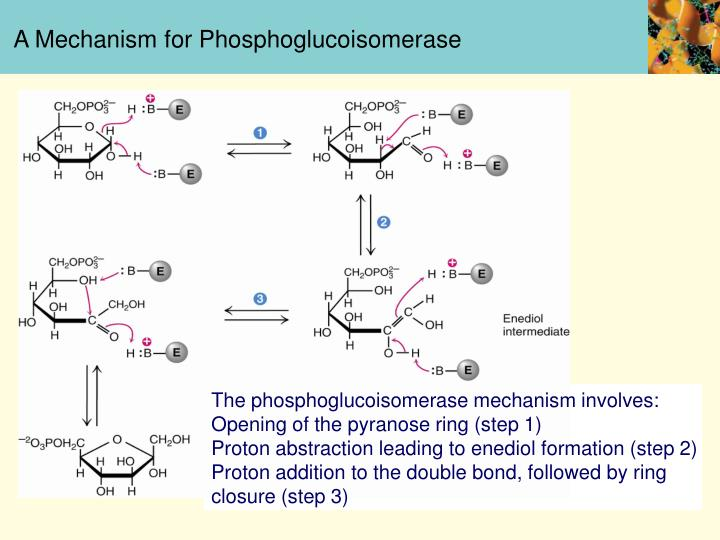 A Mechanism for Phosphoglucoisomerase