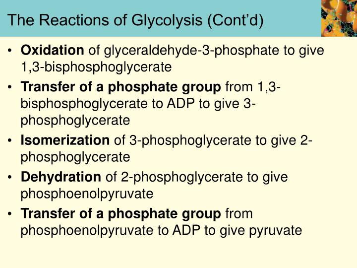 The Reactions of Glycolysis (Cont'd)