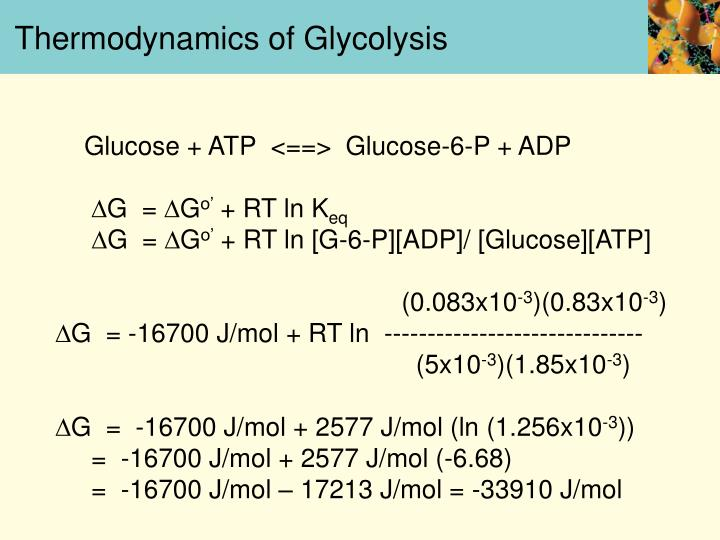 Thermodynamics of Glycolysis