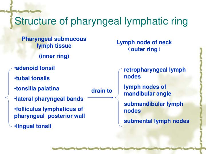 Structure of pharyngeal lymphatic ring