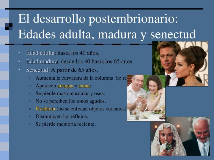 El desarrollo postembrionario: Edades adulta, madura y senectud