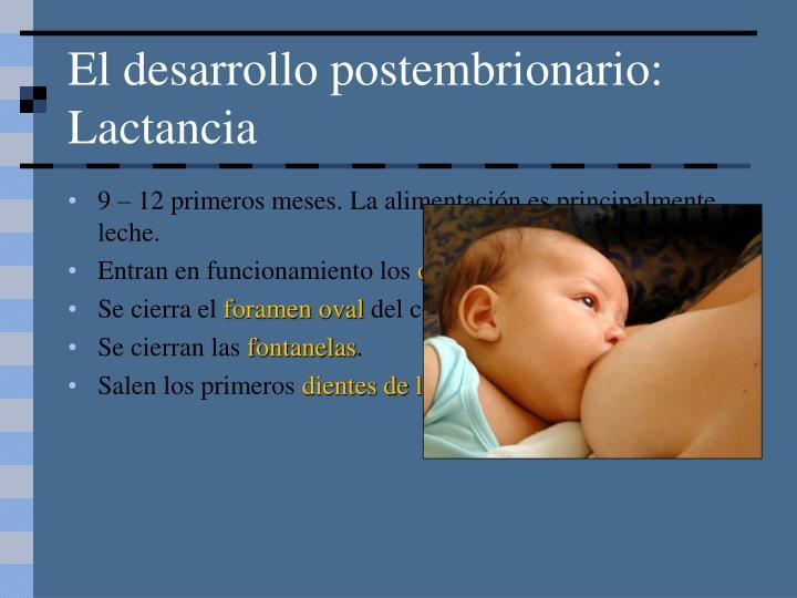 El desarrollo postembrionario: Lactancia