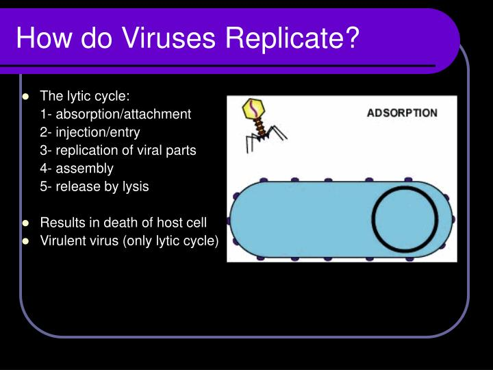 How do Viruses Replicate?