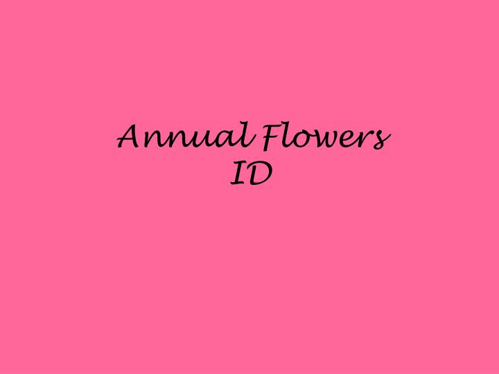 Annual flowers id