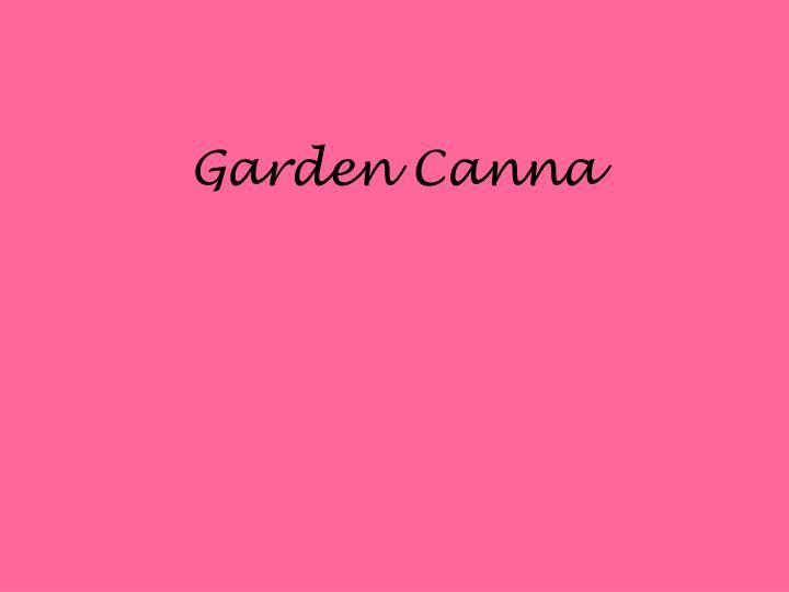 Garden Canna