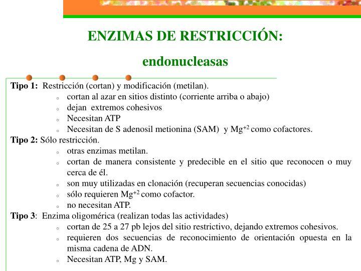ENZIMAS DE RESTRICCIÓN: