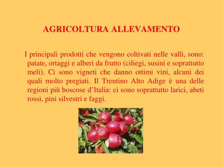AGRICOLTURA ALLEVAMENTO