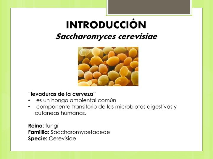 Introducci n saccharomyces cerevisiae