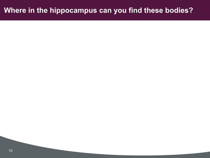 Where in the hippocampus can you find these bodies?