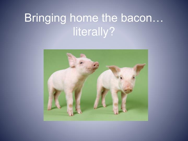 Bringing home the bacon… literally?