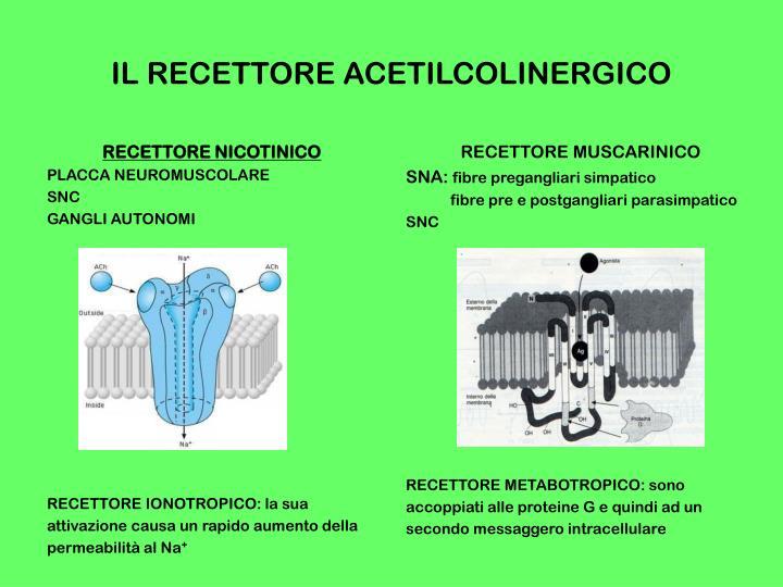 IL RECETTORE ACETILCOLINERGICO