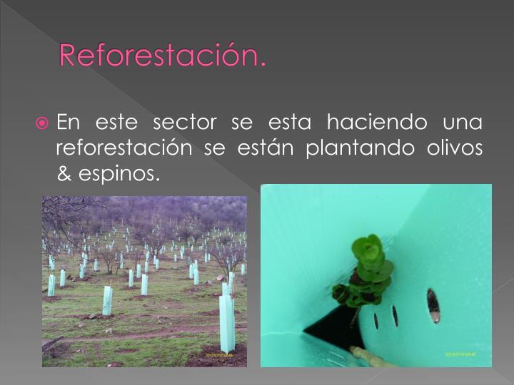 Reforestación.