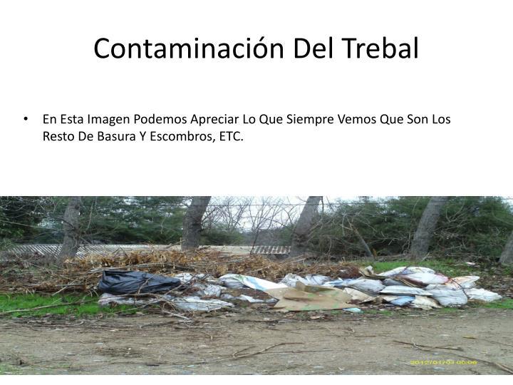 Contaminacin Del Trebal
