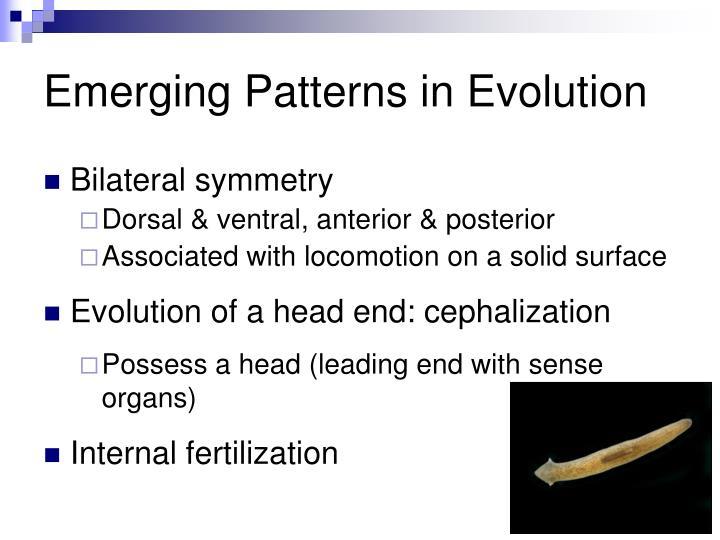 Emerging Patterns in Evolution