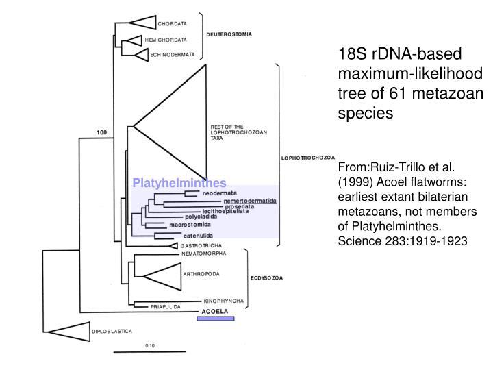 18S rDNA-based maximum-likelihood tree of 61metazoan species