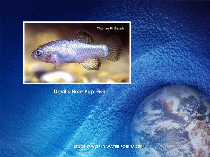 Devil's Hole Pup-Fish